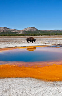 Rustic Inn At Jackson Hole - Yellowstone National Park Package